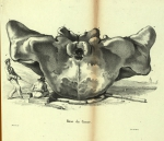 1825 - 1849