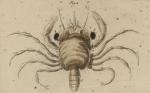 Kreeften, krabben en garnalen