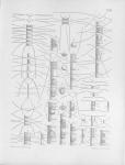 Meunier, A. (1913). Microplankton de la Mer Flamande: 1. Le genre Chaetoceros Ehr.. Mémoires du Musée Royal d'Histoire Naturelle de Belgique = Verhandelingen van het Koninklijk Natuurhistorisch Museum van België, VII(2). Hayez, imprim