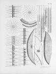Meunier, A. (1915). Microplankton de la Mer Flamande: 2. Les Diatomacées (suite) (le genre Chaetoceros excepté). Mémoires du Musée Royal d'Histoire Naturelle de Belgique = Verhandelingen van het Koninklijk Natuurhistorisch Museum van Belg