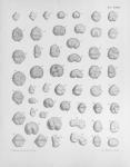 Meunier, A. (1919). Microplankton de la Mer Flamande: 3. Les Péridiniens. Mémoires du Musée Royal d'Histoire Naturelle de Belgique = Verhandelingen van het Koninklijk Natuurhistorisch Museum van België, VIII(1). Hayez, imprimeur de l'Académi