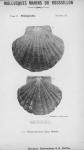 Bucquoy <i>et al.</i> (1887-1898, pl. 14)