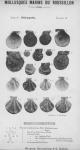 Bucquoy <i>et al.</i> (1887-1898, pl. 16)