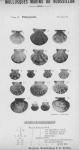 Bucquoy <i>et al.</i> (1887-1898, pl. 21)