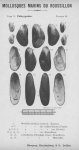 Bucquoy <i>et al.</i> (1887-1898, pl. 28)