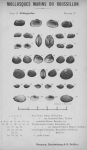 Bucquoy <i>et al.</i> (1887-1898, pl. 37)