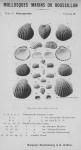 Bucquoy <i>et al.</i> (1887-1898, pl. 38)