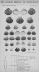 Bucquoy, E.; Dautzenberg, Ph.; Dollfus, G. (1887). Les Mollusques marins du Roussillon: 2. Pélécypodes avec atlas de 99 planches en phototypie. J.-B. Baillière & Fils: Paris, France. 2 vols: 884, 99 plates pp.