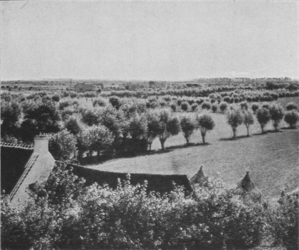 Massart (1913, foto 22)
