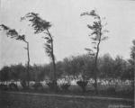 Massart (1913, foto 23)