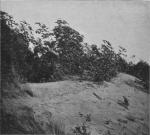 Massart (1913, foto 33)