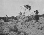 Massart (1913, foto 38)