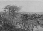 &lt;B&gt;Massart, J.&lt;/B&gt; (1913). La cinquantième herborisation générale de la Société royale de Botanique de Belgique sur le littoral belge <i>Bull. Soc. Roy. Bot. Belg. 51(2ième sér.)(1 (Vol. jubilaire))</i>: 69-185, 41 plates