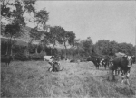 Massart (1913, foto 40)