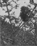 Massart (1913, foto 41)