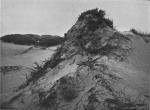 Massart (1913, foto 63)