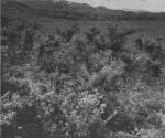 Massart (1913, foto 67)
