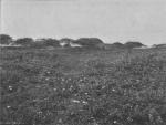 Massart (1913, foto 69)