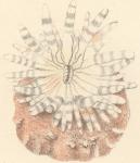 Anemonen en koralen
