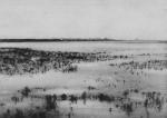 Wery (1908, foto 6)