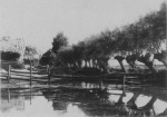 Wery (1908, foto 28)