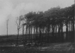 Wery (1908, foto 43)
