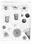 &lt;B&gt;Meunier, A.&lt;/B&gt; (1910). Microplankton des Mers de Barents et de Kara. <i>Duc d'Orléans. Campagne arctique de 1907</i>. Imprimerie scientifique Charles Bulens: Bruxelles, Belgium. 355 + atlas (XXXVII plates) pp.