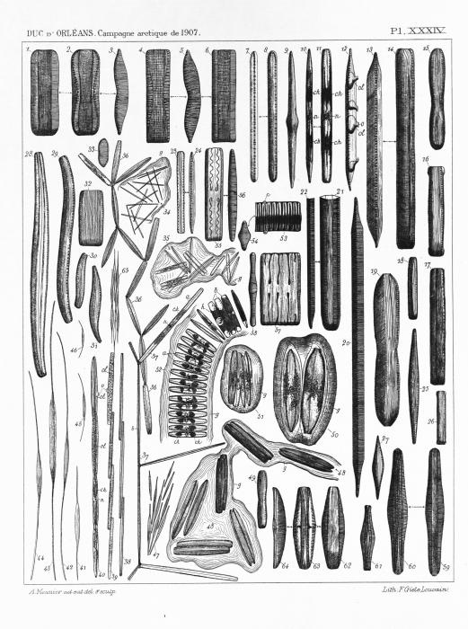 Meunier (1910, pl. 34)