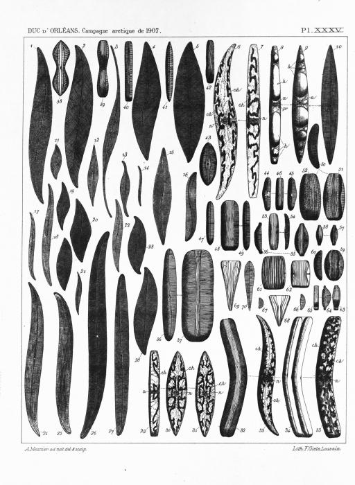 Meunier (1910, pl. 35)