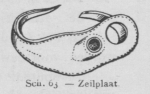 Bly (1902, fig. 63)