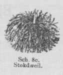 Bly (1902, fig. 80)