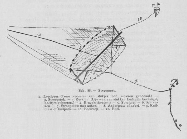 Bly (1902, fig. 88)