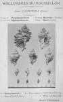 Bucquoy <i>et al.</i> (1882-1886, pl. 02)