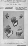 Bucquoy <i>et al.</i> (1882-1886, pl. 05)