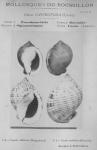 Bucquoy <i>et al.</i> (1882-1886, pl. 07)
