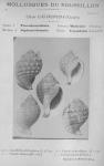 Bucquoy <i>et al.</i> (1882-1886, pl. 08)