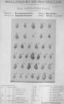 <B>Bucquoy, E.; Dautzenberg, Ph.; Dollfus, G.</B> (1882). Les Mollusques marins du Roussillon: 1. Gastropodes avec atlas de 66 planches photographiées d'après nature. J.-B. Baillière & Fils: Paris. 570, 66 plates pp.