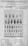 Bucquoy <i>et al.</i> (1882-1886, pl. 14)