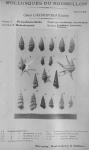 Bucquoy <i>et al.</i> (1882-1886, pl. 23)