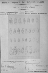 Bucquoy <i>et al.</i> (1882-1886, pl. 32)