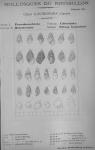 Bucquoy <i>et al.</i> (1882-1886, pl. 36)