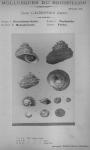 Bucquoy et al. (1882-1886, pl. 38)