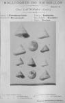 Bucquoy et al. (1882-1886, pl. 41)