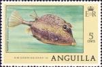 Acanthostracion polygonius