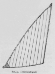 Bly (1902, fig. 35)