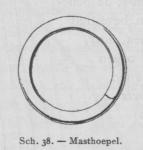 Bly (1902, fig. 38)