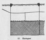 Derolez (1950, fig. 17)
