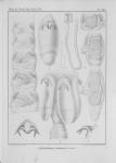 &lt;B&gt;Van Beneden, P.-J.&lt;/B&gt; (1850). Recherches sur la faune littorale de Belgique: les Vers Cestoïdes <i>Mém. Acad. R. Sci. Lett. B.-Arts Belg., Collect. 4 XXV</i>: 1-199, plates I-XXIV
