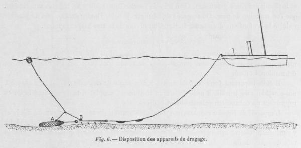 Gilson (1900, fig. 6)
