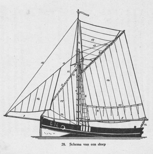 Derolez (1950, fig. 28)